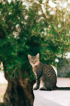 木に対して建物の端に猫