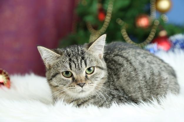 Кот на пледе на елке