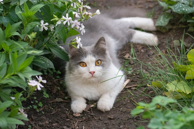 夏の緑豊かな庭園の歩道に猫。タンポポが咲き乱れる牧草地に横たわる元気な猫。自然と調和して生きています。