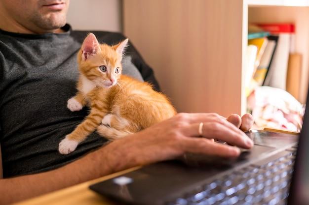 ペットと一緒に家で働いているラップトップ上の猫