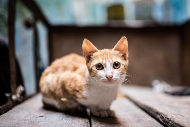 외 바퀴 손수레에서 거리에 고양이