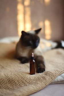 Cat out of focus with medical oil can at point of focus