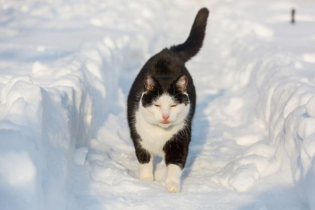 겨울철 눈 속에서 고양이