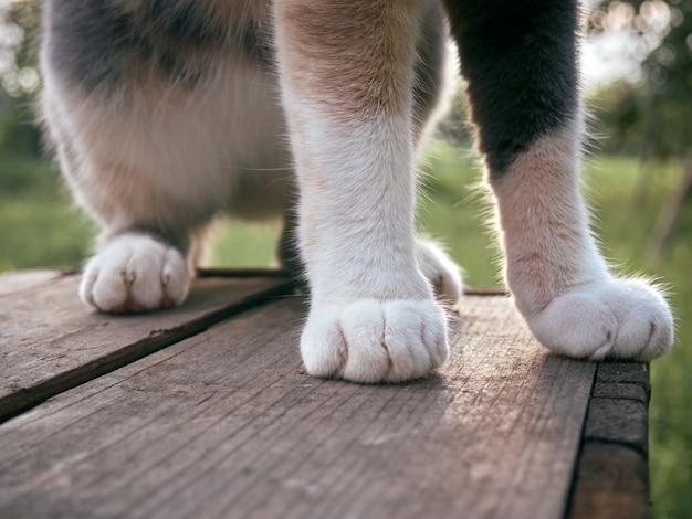Кошачья лапа с когтем