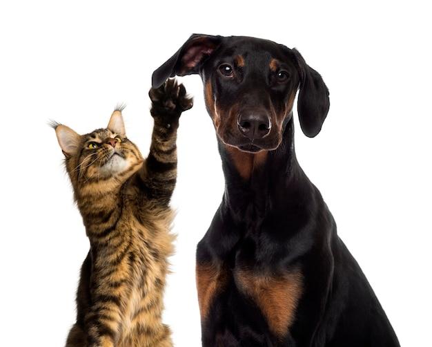 猫が犬の耳に手を振る