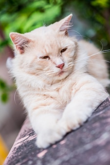 Cat persian, lovely animal and pet in the garden