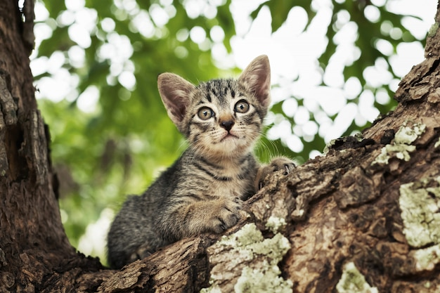 Cat playing on tree