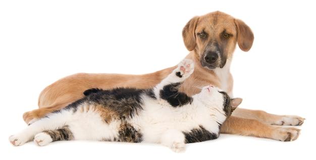 雑種犬と遊ぶ猫。白で隔離。