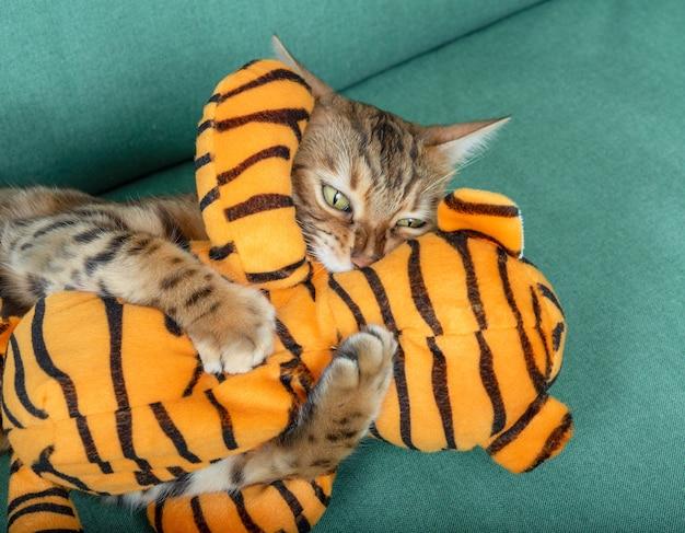 猫はおもちゃで遊んで、緑のソファに横になり、ペットの娯楽