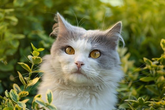 庭の猫の肖像画