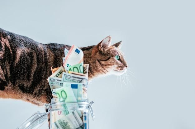 돼지 저금통의 배경에 포즈를 취하는 고양이. 순종 애완 동물의 유지 관리 비용 개념. 혼합 매체