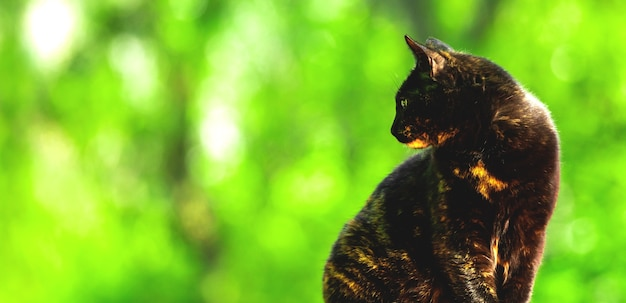 Cat in profile on the background of greenery, banner with copy space photo