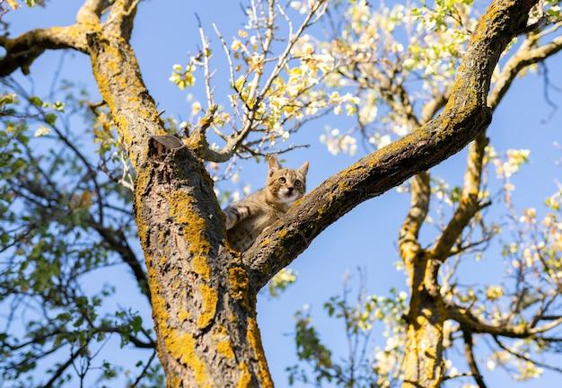 Кошка-щенок на дереве не может спуститься