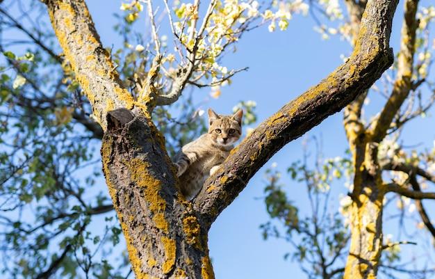Кошка-щенок на дереве