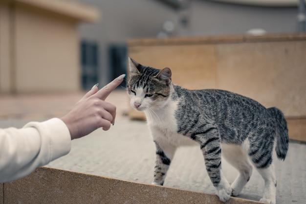 고양이는 사람, 사람, 동물의 손에 손을 뻗습니다.