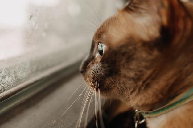 猫はリラックスして窓の外を見ています