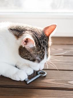 고양이는 고대 키로 휴식을 취합니다. 새 집을 구입의 개념입니다. 나무 배경입니다. 집 고양이의 클로 우즈 업 초상화, 동물이 물건을 킁킁