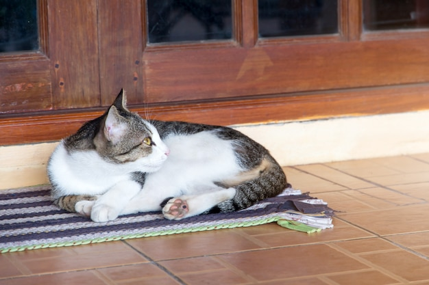 The cat relaxing on floor,brown cat and white cat