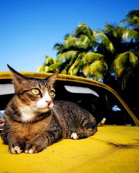 Кошка отдыхает на старом классическом автомобиле на тропическом острове