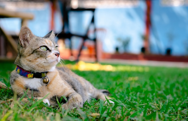 Cat relaxing and sitting on the grass.