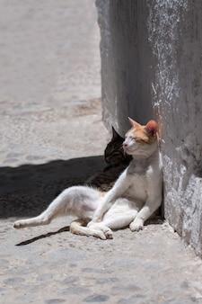 Cat relaxing in tetouan
