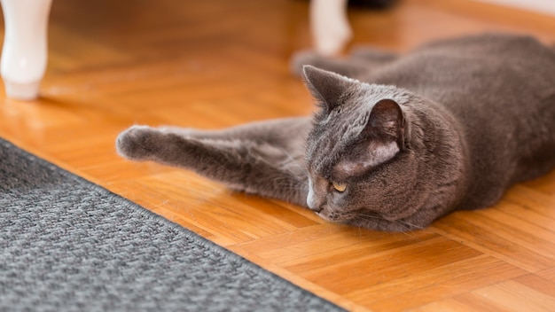 Cat resting on the house floor