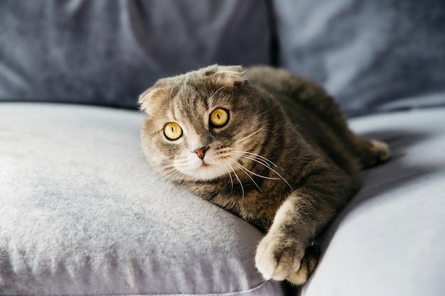 猫がソファーで休んで
