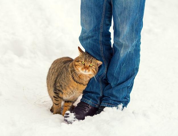 Кошка трется о ноги мужчины на улице зимой