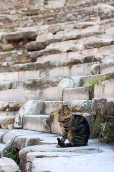 The cat on the ruins in ephesus