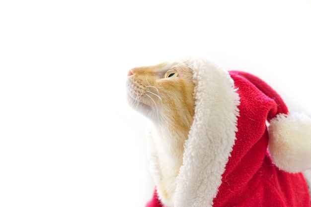 Cat in santa suit on white background