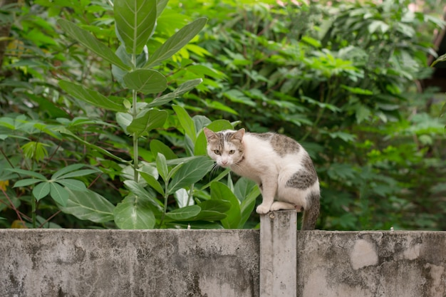 Cat sit down on a concrete wall