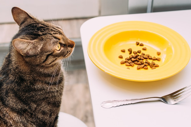 Cat sits on a chair at the table with a plate and fork.