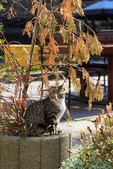 The cat sits on a flower bed.