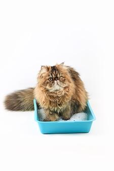猫はトイレに座っています。茶色のペルシャ猫