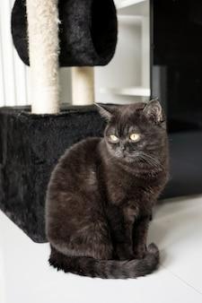 Кот сидит возле своего шикарного дома и грустно смотрит в окно