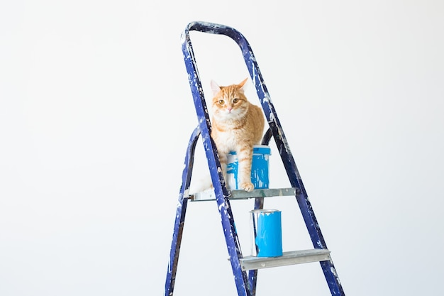 猫は脚立に座っています