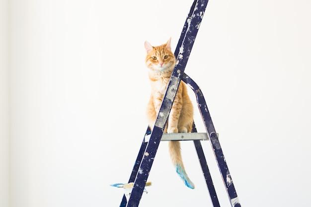 고양이는 발판 사다리에 앉는다.