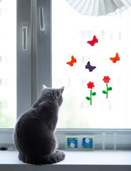 猫は家の窓辺に座って、通りの窓の外を見ています