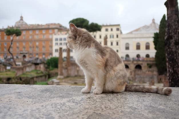 Cat sits on a rock in square