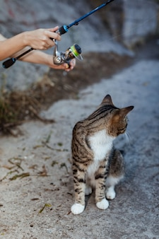 Cat sits and waits on the shore, fisherman with fishing rod wheel