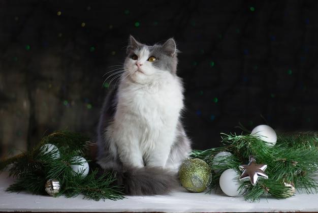 クリスマスのカラフルなお祝いのライトのボケ味の背景とクリスマスのおもちゃを座って見ている猫。ペットはクリスマスのおもちゃで遊ぶ。