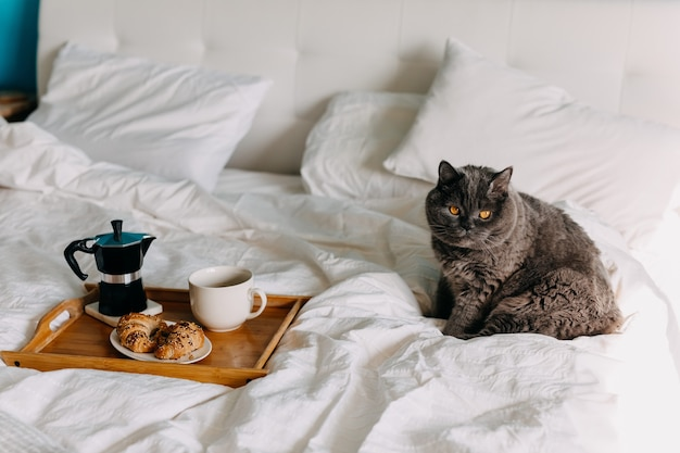 Cat sitting on bed next to a wooden tray with croissants and cup of coffee