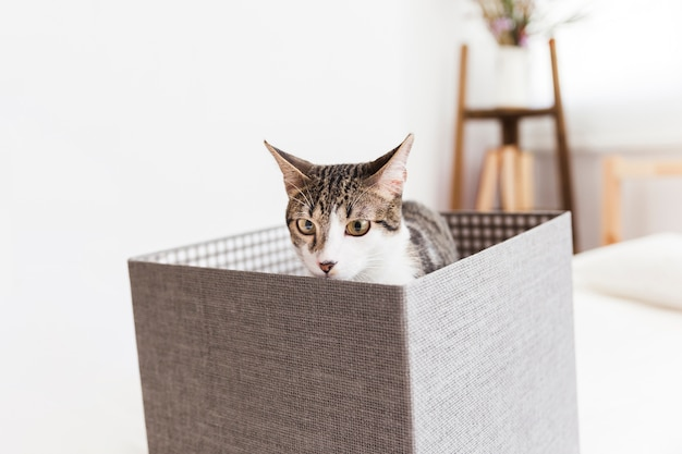 Cat sitting in box and sniffing