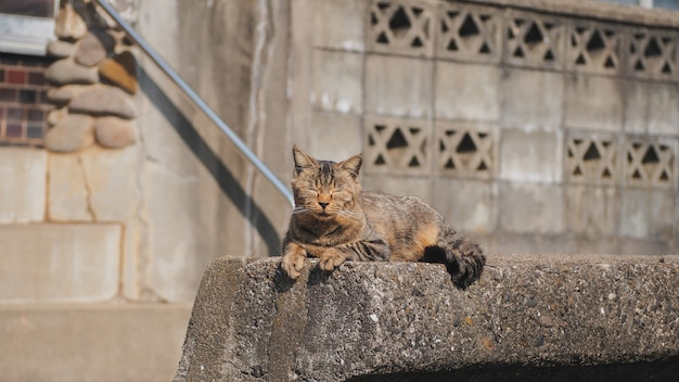A cat sitting on the concrete stone wall