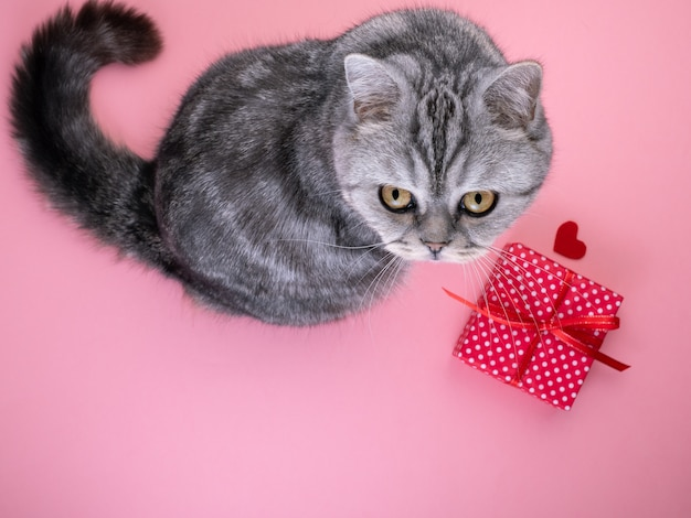 Cat sitting next to gift with heart and looking up at camera, pink background, empty space for text