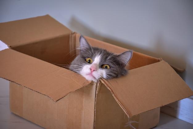 箱の中に座っている猫、猫の肖像画