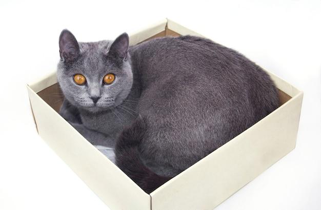 Кошка сидит в картонной коробке. кот в коробке. кошка сидит в картонной коробке.