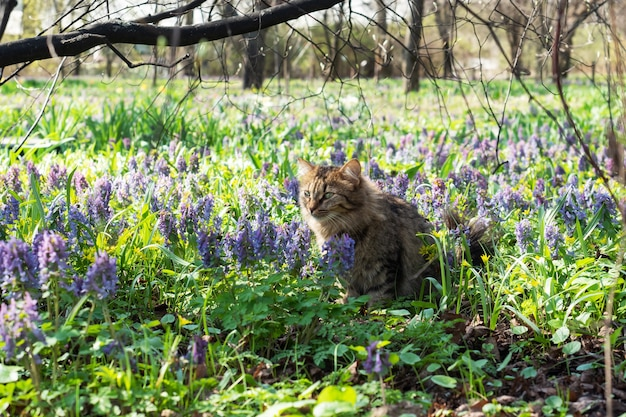 Кошка сидит на цветочном лугу