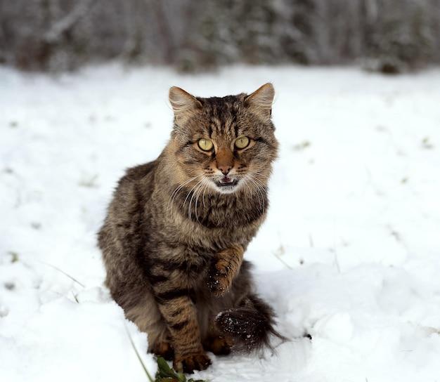 雪の中で座っている猫