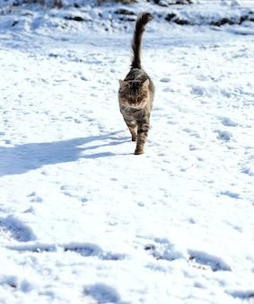 Кошка сидит в снегу